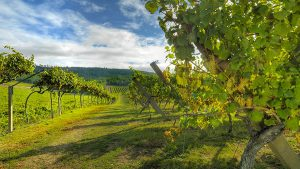 TOP25-Restaurants-Wines-Reviews-International-Wines-with-Ratings